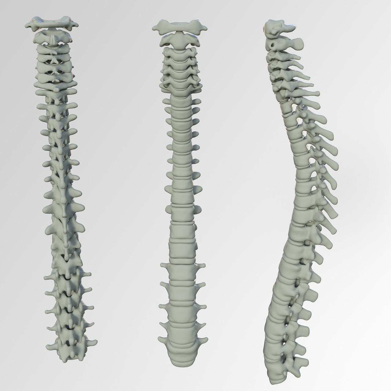 Spinal Screenings